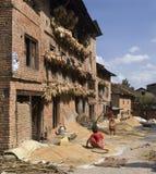 Harvest Time - Kathmandu Valley - Nepal royalty free stock images