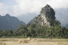 Harvest time in Laos. Yellow rice fields with haystacks in mountains Stock Images