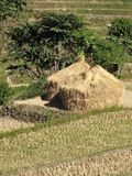 Harvest time in Nepal Royalty Free Stock Photo