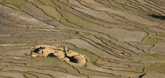 Harvest time in Nepal Stock Photography