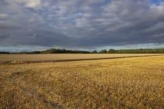 Harvest time Stock Photos