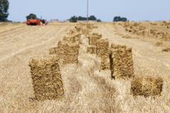 Harvest time in Poland Royalty Free Stock Images