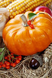 Harvest time, pumpkin Royalty Free Stock Image