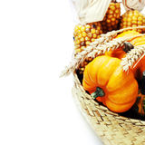 Harvest time, pumpkins Royalty Free Stock Image