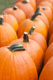 Harvest Time: Pumpkins Stock Image