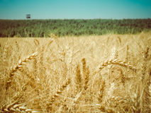 Harvest time retro Stock Image