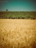 Harvest time retro Stock Photo