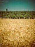 Harvest time retro Stock Photo