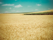 Harvest time retro Royalty Free Stock Photos
