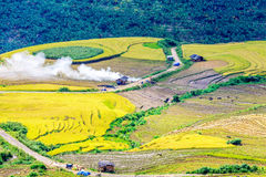 Harvest time on ripen rice terraces of the H'mong minority people in Y Ty, Lao Cai, Vietnam. Royalty Free Stock Photos