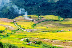 Harvest time on ripen rice terraces of the H'mong minority people in Y Ty, Lao Cai, Vietnam. Stock Image