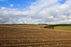 Harvest time scenery Stock Photo