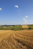 Harvest time scenery Royalty Free Stock Image