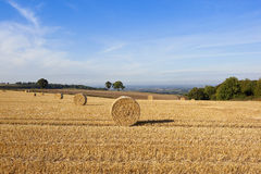 Harvest time scenery Royalty Free Stock Images