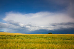 Harvest time and summer landscape after storm Royalty Free Stock Photos
