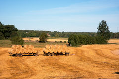 After harvest. Harvest time in the Swedish countryside. Straw bales on trailers ready for transport from the field in the end of sommer Stock Photos