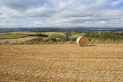 Harvest time view Royalty Free Stock Photos