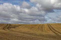 Harvest timenear flamborough head. After crop cutting near flamborough head with interesting cumulas clouds Royalty Free Stock Image