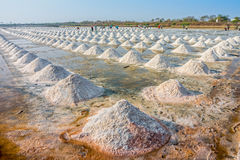 The harvest times of salt and workers in salt evaporation pond. The salt evaporation pond is in Thailand Royalty Free Stock Image