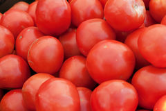 Harvest of tomatos at farmers market Stock Photos