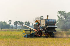 Harvest. Tractors are harvesting rice in the field Royalty Free Stock Image