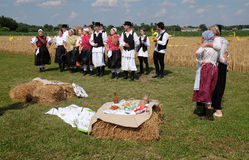 The harvest traditionally begins assembling villagers, singing and dancing and good food. In Nedelisce, Croatia stock images