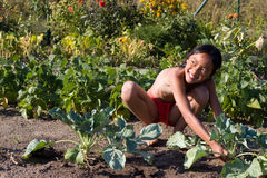 Harvest turnip greens. Little happy girl reaping turnip greens from the garden royalty free stock image