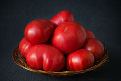 Harvest of unusually large farmer`s tomatoes in a basket on a bl Royalty Free Stock Image