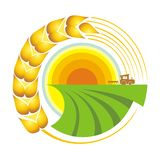 Harvest. Vector illustration. Combine harvester on a wheat field against sun Royalty Free Stock Images