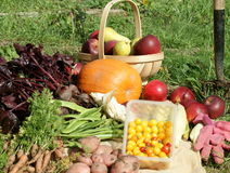 Harvest of vegetables Stock Photography