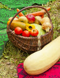 Harvest of vegetables in the basket Royalty Free Stock Photo