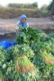 Harvest vegetables Stock Images