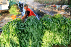 Harvest vegetables Stock Photos