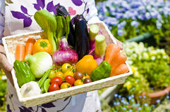 Harvest of vegetables. Fresh vegetables that were harvested in the home garden stock photo