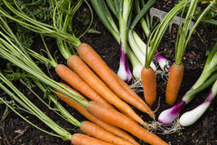 Harvest of vegetables in a garden Stock Photography