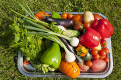 Harvest of vegetables Royalty Free Stock Image