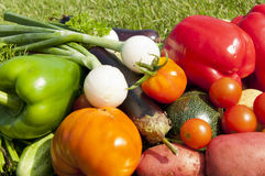Harvest of vegetables Royalty Free Stock Photos