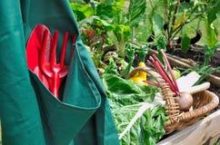 Harvest of vegetables Stock Photo