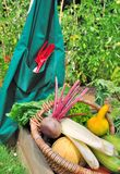 Harvest of vegetables Royalty Free Stock Photo