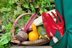 Harvest of vegetables Royalty Free Stock Photography