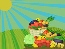 Harvest of vegetables harvested in the field. Basket of vegetables harvests outdoors in a field under a bright sun Royalty Free Stock Photography