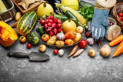 Harvest vegetables with herb kitchen garden. On grey concrete surface top view. Healthy food and vegan food still life garden inventory royalty free stock images