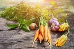 Harvest vegetables with herbs and spices stock photos