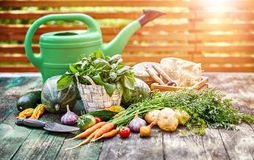Harvest vegetables with herbs and spices royalty free stock photo
