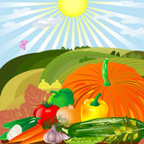 Harvest of vegetables in an outdoor Stock Images