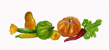 Harvest vegetables, Pumpkin, Cougettes, Pepper. Stock Photography