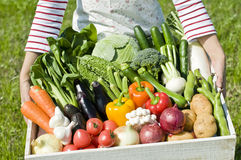 Harvest of vegetables. Shot in the locality fresh vegetables stock photography