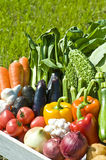 Harvest of vegetables. Shot in the locality fresh vegetables stock image