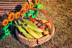 Harvest vegetables sold at the fair Royalty Free Stock Photo