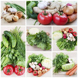 Harvest of vegetables Stock Photos